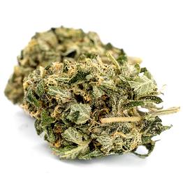 Buy CBD hemp flower Stephen-Hawkings-Kush